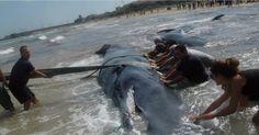 Informazione Contro!: POLITICA Strage di cetacei. Esercitazioni militari...