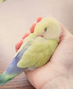 Aww...birds sleep! That's so sweet (in the owner's hand).