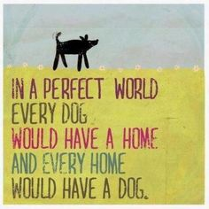 In a perfect world every dog would have a home and every home would have a dog.....