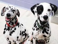 pongo and perdita - Google Search