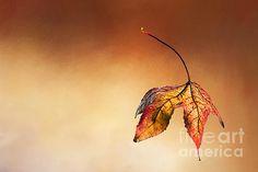 Autumn Leaf Fallen