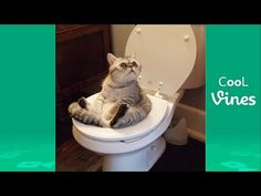 Try Not To Laugh Challenge - Funny Cat & Dog Vines compilation 2017 - YouTube