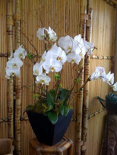 Orchid arrangement 6