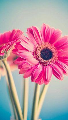 As luv Wallpaper Food, Flower Wallpaper, Pretty Flowers, Pink Flowers, Amazing Flowers, Beautiful Flowers Wallpapers, Pretty Wallpapers, Cellphone Wallpaper, Iphone Wallpaper