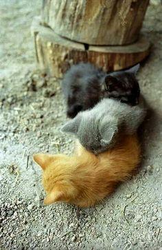 Three sweet kittens. Follow me at http://www.pinterest.com/cattreehouse/