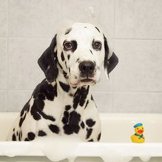 Oh, was this bath for you? My bad. Want to join me?....................