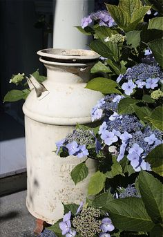 Old milk can in the garden