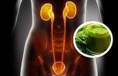 Purifique seus rins com água de salsa | melhorcomsaude.com