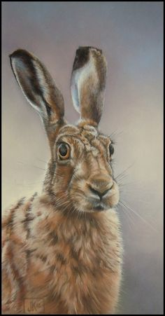 Hare portrait by zusse