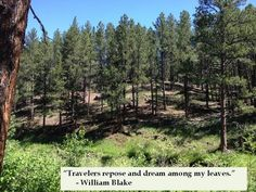 Travelers repose and dream among my leaves ~ Wiliam Blake quote on Nature #nature #quotes