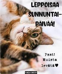 Sanoja elämästä - Hyvää sunnuntaita ❤️ | Facebook Sunday Quotes, Cats, Animals, Facebook, Gatos, Animales, Animaux, Animal, Cat