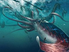 Edith Widder: How we found the giant squid | Video on TED.com