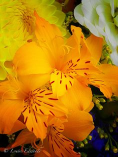 """Flower of the Day - July 31, 2012. """"Orange Lilies"""", Orenco Station Farmers Market, Hillsboro, Oregon. Copyrights belong to the photographer: Louise Edwards, L Photography, L Images.   ©2012 All Rights Reserved."""