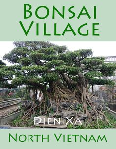 North Vietnam is home to many villages specialising in one particular craft Dien Xa is famous for its bonsai trees, many of them large and intricate.