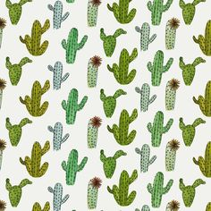 Abby Galloway - Cactus