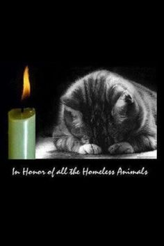 The Animal Rescue Site....please, this Season be kind and adopt a kitty or dog! Your life will improve instantly!