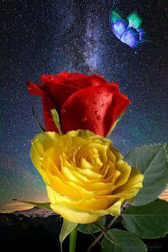 Gyönyörű éjszaka, színes rózsákkal 🌛🌠🌜 Beautiful Nature Pictures, Beautiful Moon, Beautiful Roses, Butterfly Art, Flower Art, Butterflies, Rose Images, Just Beauty, Different Flowers