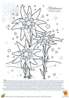 Coloriage Fleur Edelweiss.16 Meilleures Images Du Tableau Coloriage Boule A Neige Christmas