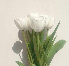Flower Aesthetic, Life Is Like, Flower Power, Tulips, Beautiful Flowers, Fields, Skate, Plants, Logo