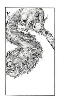 squirrel by Palila on deviantart