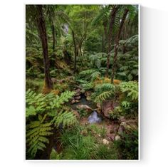 Limited and Open Edition Art Prints Available. - Taken in São Miguel, Azores (Açores), Portugal - Flowing thermal spring water, nourishes the surrounding creek's large prehistoric Ferns in this dense Laurel forest. Spring Water, Prehistoric, Fine Art Paper, Art Prints, Landscape, Artwork, Plants, Photography, Travel