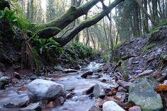 Stream, Rocks, Water, Nature, Stone