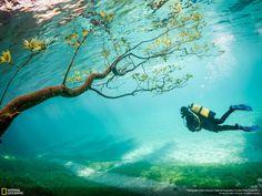 Le lac vert (Grüner See) se trouve à Tragöß, en Autriche. Au printemps, la fonte des neiges fait monter le niveau de l'eau d'à peu près 10 mètres. Ce phénomène, qui ne dure que quelques semaines, recouvre les chemins de randonnée, les prairies et les arbres.