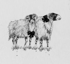 Sheep - pencil, collage