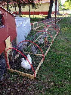 Build A DIY Chicken Tunnel In Your Backyard Raising chickens in your backyard or garden is great idea to get the freshest eggs and healthy meat. It seems to be chickens to free range, but problems can arise. Putting the birds in the cage is not […] Backyard Chicken Coop Plans, Chicken Coop Run, Portable Chicken Coop, Chicken Tractors, Building A Chicken Coop, Chicken Runs, Chickens Backyard, Chicken Feed, Chicken Wire