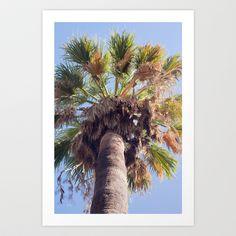 Palm Washingtonia 4099 Art Print by metamorphosa - $22.88