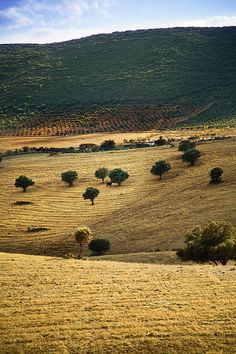 Dehesa, Typical Pasture Of Extremadura Canvas Print / Canvas Art by Gonzalo… Merida, All About Spain, Paraiso Natural, Destinations, Beautiful Castles, All Nature, Spain And Portugal, Travel Memories, Culture Travel