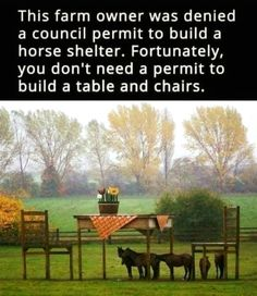 This farm owner was denied a council permit to build a horse shelter. Fortunately, you don't need a permit to build a table and chairs. Funny Photos Of People, Funny Pictures, Life Hacks Pictures, School Pictures, Sports Pictures, Animal Pictures, Horse Shelter, Horse Stables, The Funny