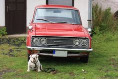 english bulldog Oliver with Toyota Corona :)