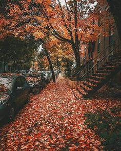 Montreal, Quebec, Canada 🇨🇦 by Travels Fervor Autumn Cozy, Fall Winter, Wallpaper Paisajes, Mont Royal Montreal, Montreal Quebec, Foto Gif, Autumn Scenes, Fall Wallpaper, Sunset Wallpaper