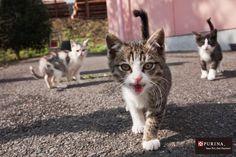 仲間に入れて欲しいニャ?/猫 ネコ cats  (Nestle PURINA ネスレ日本)