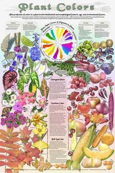 Ever wonder why plants are different colors? This poster explains the four classes of plant pigments and why the colors are important indicators of NUTRITIONAL CONTENT in fruits and veggies.