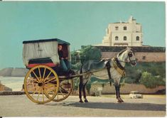 Algarve, Portugal, Portuguese, Old Photos, Horses, Animals, Image, Old Pictures, Cards
