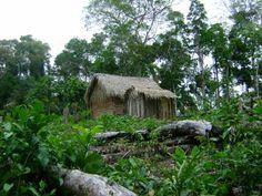 Xapuri Agora!: Reserva Extrativista Chico Mendes