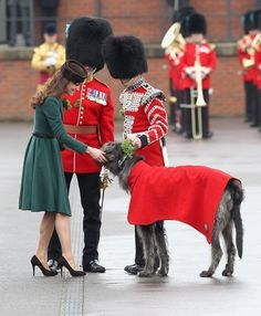 Catherine, Duchess of Cambridge presents a shamrock to the Regimental mascot on St Patrick's Day at Aldershot Barracks. by marylou