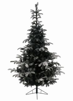 New Post nordmann fir christmas tree Nordmann Fir Christmas Tree, Balsam Fir, Blue Spruce, Beautiful Christmas Trees, Douglas Fir, Tk Maxx, Deck The Halls, Garden Furniture, Things To Come