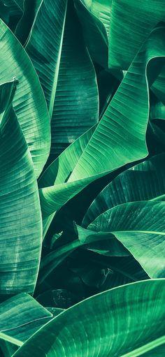 Tropical, Banana, Creative Inspiration, Plant Leaves, Wall Art, Wallpapers, Murals, Diy Decorating, Plants