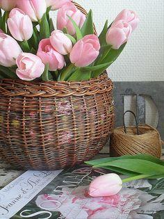 quenalbertini: Pink tulips in a basket My Flower, Flower Art, Beautiful Flowers, Beautiful Things, Orquideas Cymbidium, Raindrops And Roses, Owl Eyes, Pink Tulips, Arte Floral