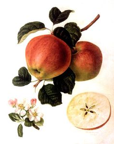 laminas antiguas frutas - Buscar con Google