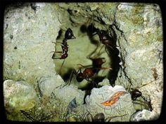 Fotos nocturnas: Retroiluminación... Fotografía móvil | Hormiguero fuente nueva - Promodecor (Montilla)