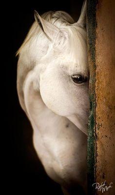 Siendo uno de los animales más fuertes demuestra su sensibilidad...