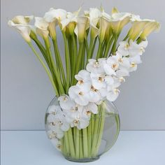 on A visually stunning orchid arrangement featuring Calla lilies.A visually stunning orchid arrangement featuring Calla lilies.