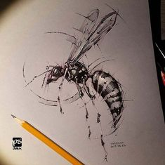 Coup de coeur: the drawings / sketches of PS Delux - ideen - Animal Sketches, Animal Drawings, Drawing Sketches, Pencil Drawings, Drawing Animals, Sketching, Insect Art, Sketch Inspiration, Painted Paper