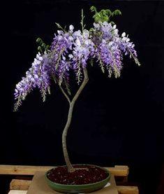 ᴥ♦I love this pretty tree!☼♣       #BonsaiInspiration