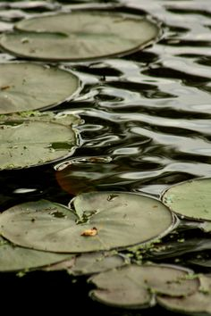 Military / Olive Green and water lilies