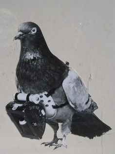 Schon vor dem Ersten Weltkrieg schickte das Militär seine fliegenden Späher aus: Tauben mit Kameras! Zu sehen bei heute1914
